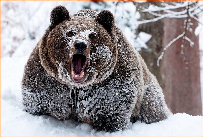 Cocaine Bear.
