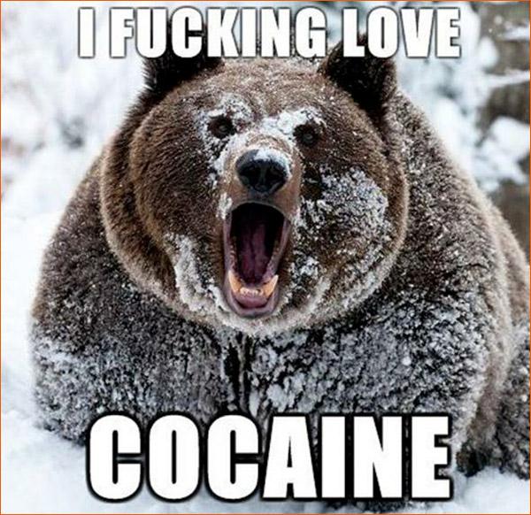 Coacaine Bear.