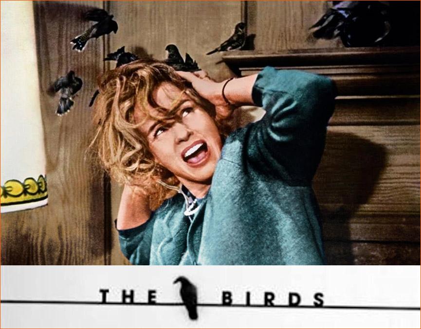 Photographie de Tippi Hedren alias Melanie Daniels sur le tournage des Oiseaux d'Alfred Hitchcock.