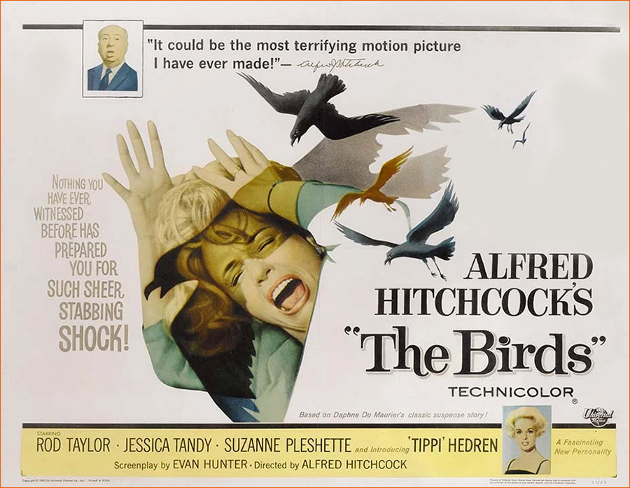 Les oiseaux d'Alfred Hitchcock.