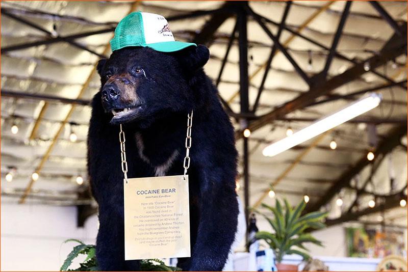 Pablo EskoBear alias Cocaine Bear exposé au Kentucky Fun Mall.